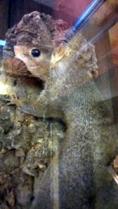 Jennings_Squirrel